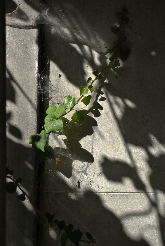 Wien_Zentralfriedhof_10_2019_71