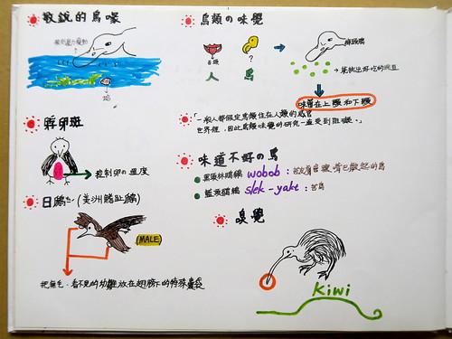 20190815-yoyo畫鳥的感官3