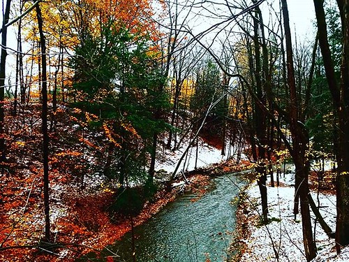 Stream on a cold fall morning #ChestnutRidge #wny #orchardpark #autumn #fall #nature #hiking #trees #stream #runningwater