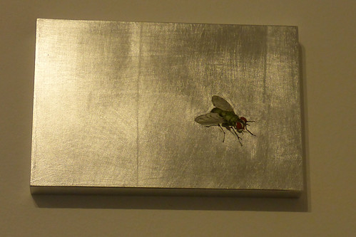 Schweigende Fliege