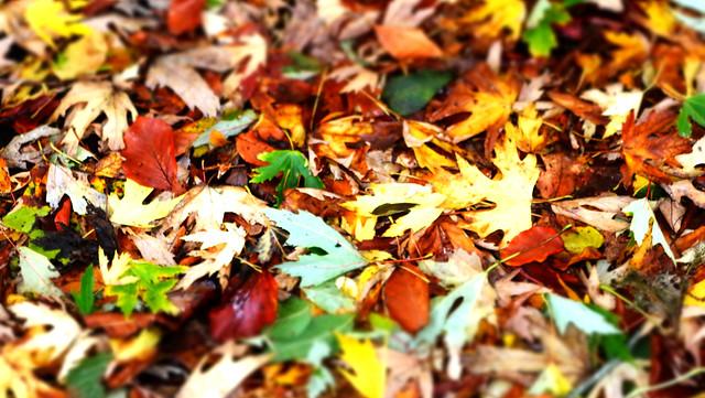 Carpet of Autumn