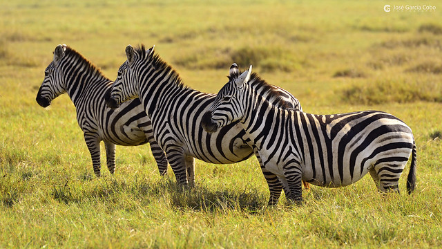 20190724 Tanzania-Ngorongoro (234) R01