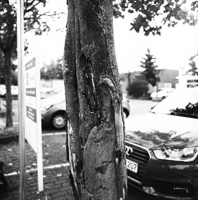 Die Wunde des Baums / abrasive wound of a tree