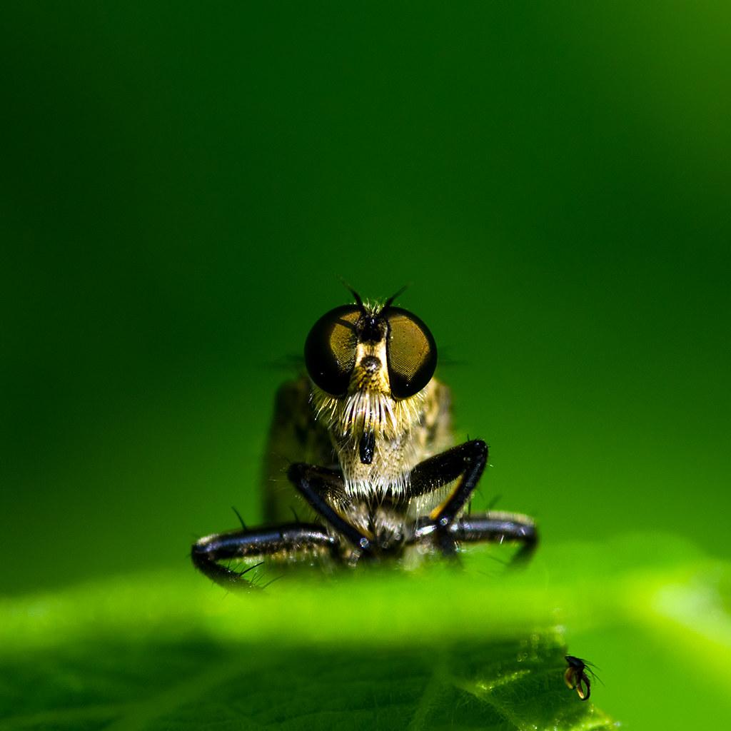 Macros/  proxi/  insectes  - Page 18 49007965462_3ec88694b9_b