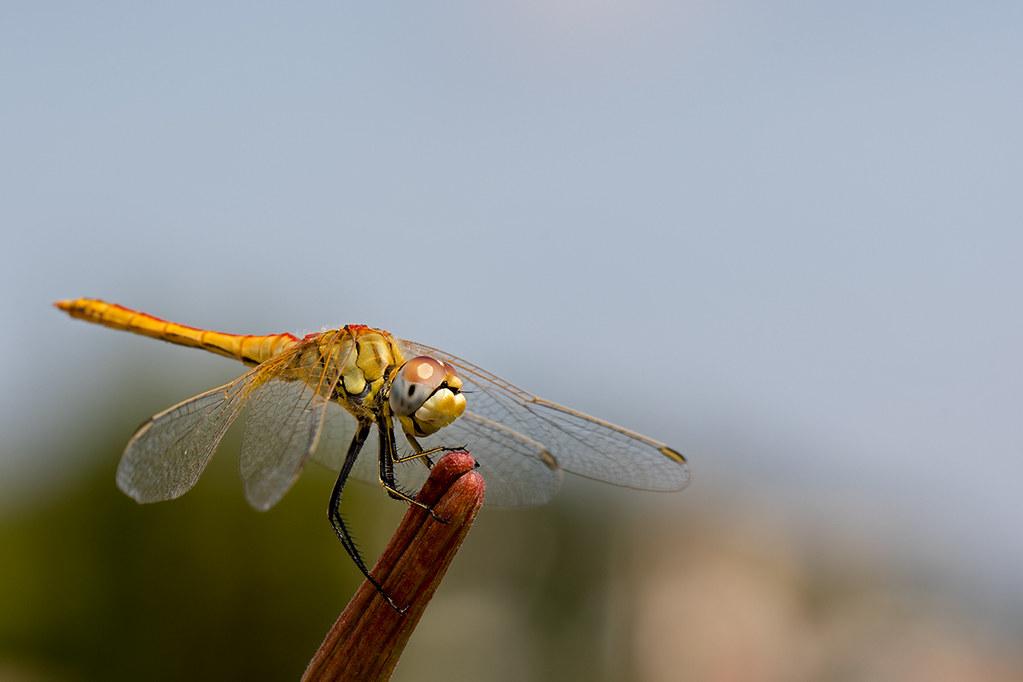 Macros/  proxi/  insectes  - Page 18 49007980542_363b69cffc_b