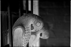 Parrot negative