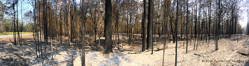 South Side of Black Head Road Fire Scene, Hallidays Point, Mid North Coast, NSW