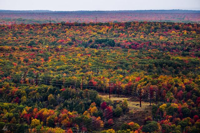 Autumn Pennsylvanian palette