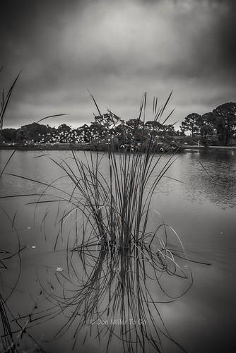 landscapes blackandwhite blackandwhitephotography reflections lakes d810