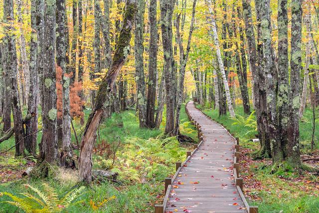 Jessup Path Acadia
