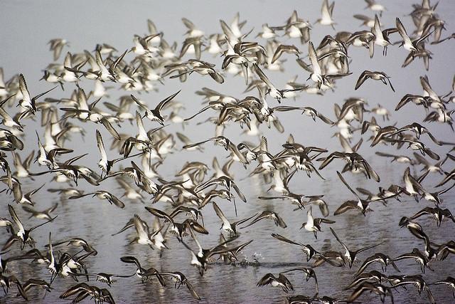 Birds at Mud Bay Park, Surrey, BC