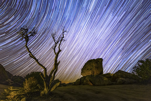 Star Trails, Boulders, and Dead Tree in the High Desert.