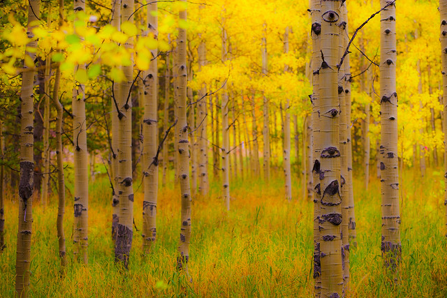 The Aspens Have Eyes (Explored)