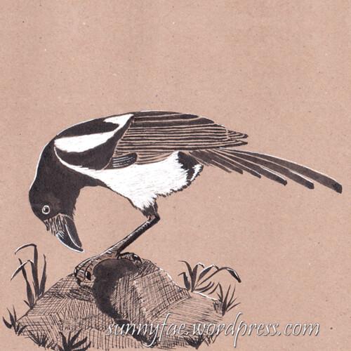 31 magpie