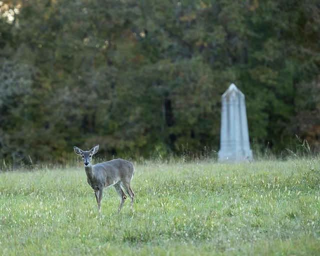 9th Indiana Deer