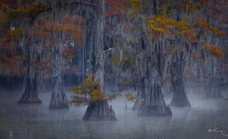 Caddo Lake #6