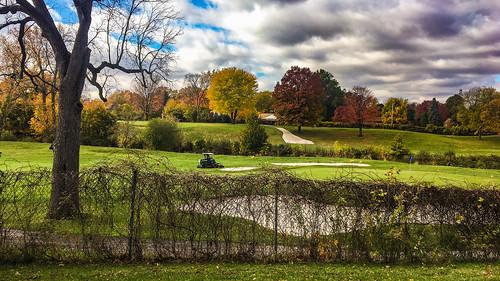 trees orange green november fall fallcolors landscape golfcourse