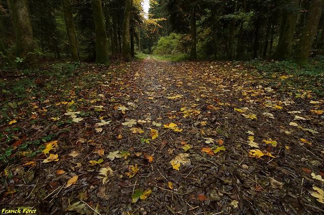 Les feuilles d'automne tombent -  bois Bovard  - Saizenay - Jura
