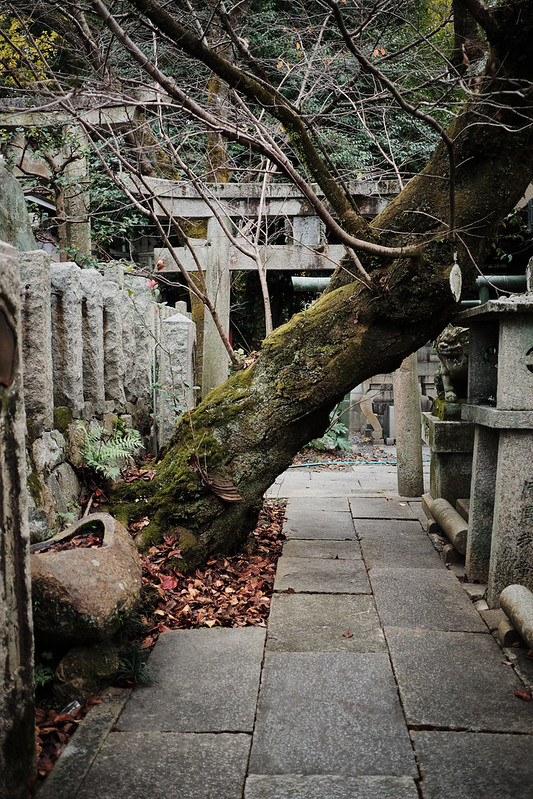 A tree blocking the path to a shrine in Kyoto