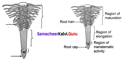 Samacheer Kalvi 10th Science Solutions Chapter 14 Transportation in Plants and Circulation in Animals 3