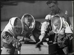 Archiv U275 Imkerausbildung in der Sowjetunion, 1950er