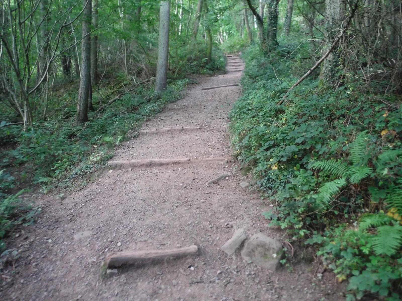 Path up The Skirrid, through Caer Wood SWC Walk 347 - Llanvihangel Crucorney Circular (via Bryn Arw and The Skirrid)