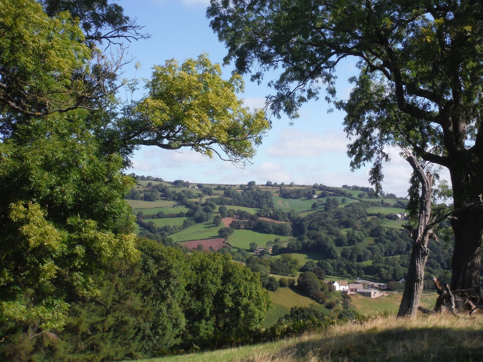 View through Trees, Ascent up Bryn Arw SWC Walk 347 - Llanvihangel Crucorney Circular (via Bryn Arw and The Skirrid)