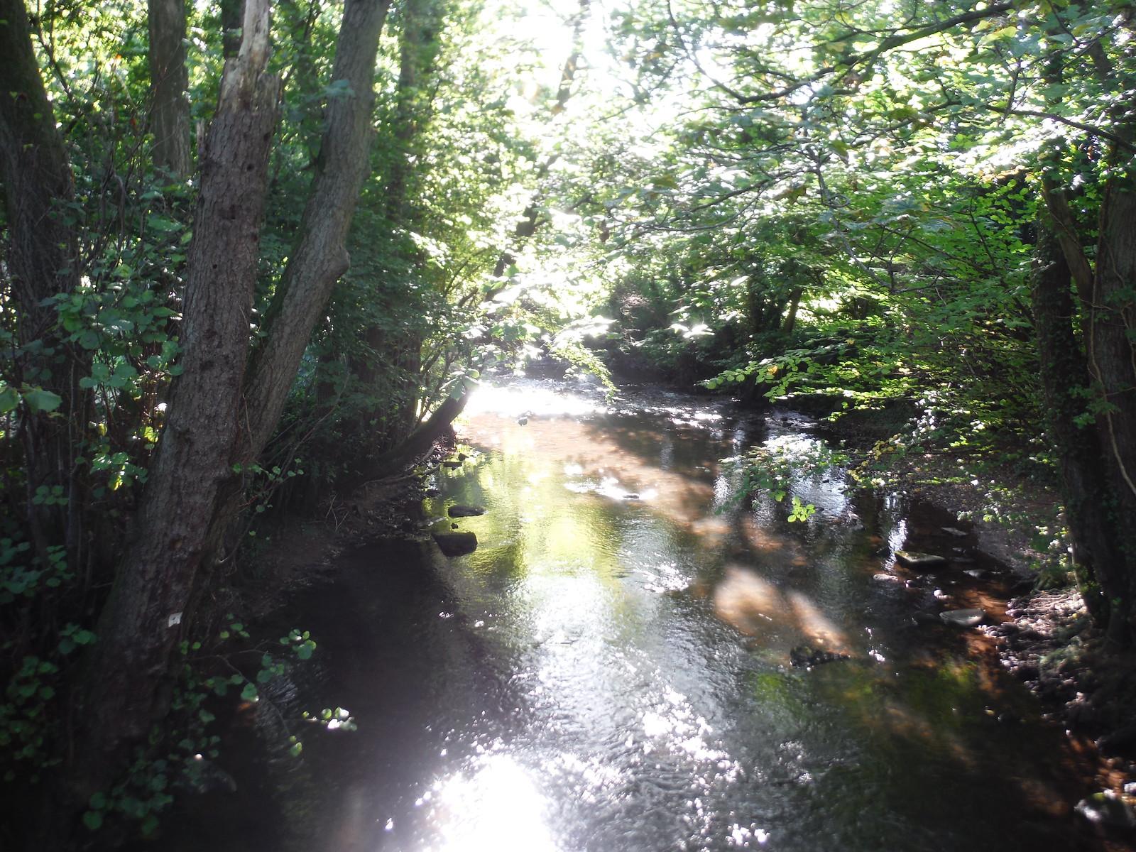 Honddu River/Afon Honddu, near Strawberry Cottage SWC Walk 347 - Llanvihangel Crucorney Circular (via Bryn Arw and The Skirrid)