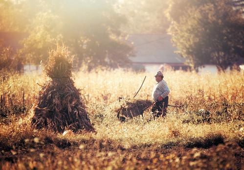 work autumn field light september ukraine village rural countryside bukovina