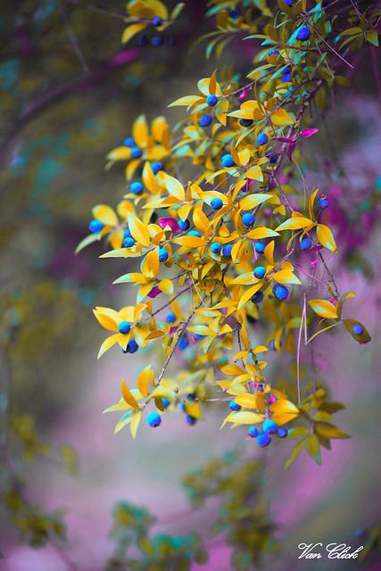 Nature's color palette!