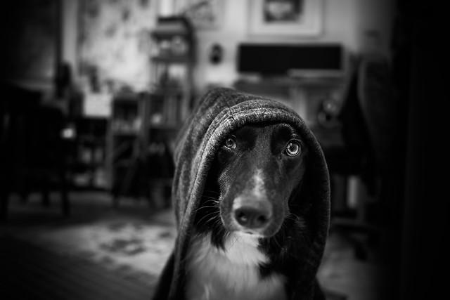 Obi-Dog Kenobi