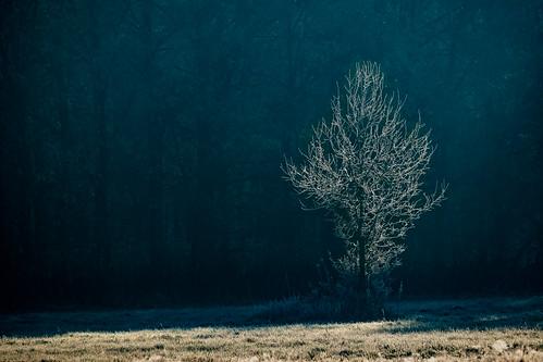 landscape nature poland mazovia flora tree morning frost hoarfrost