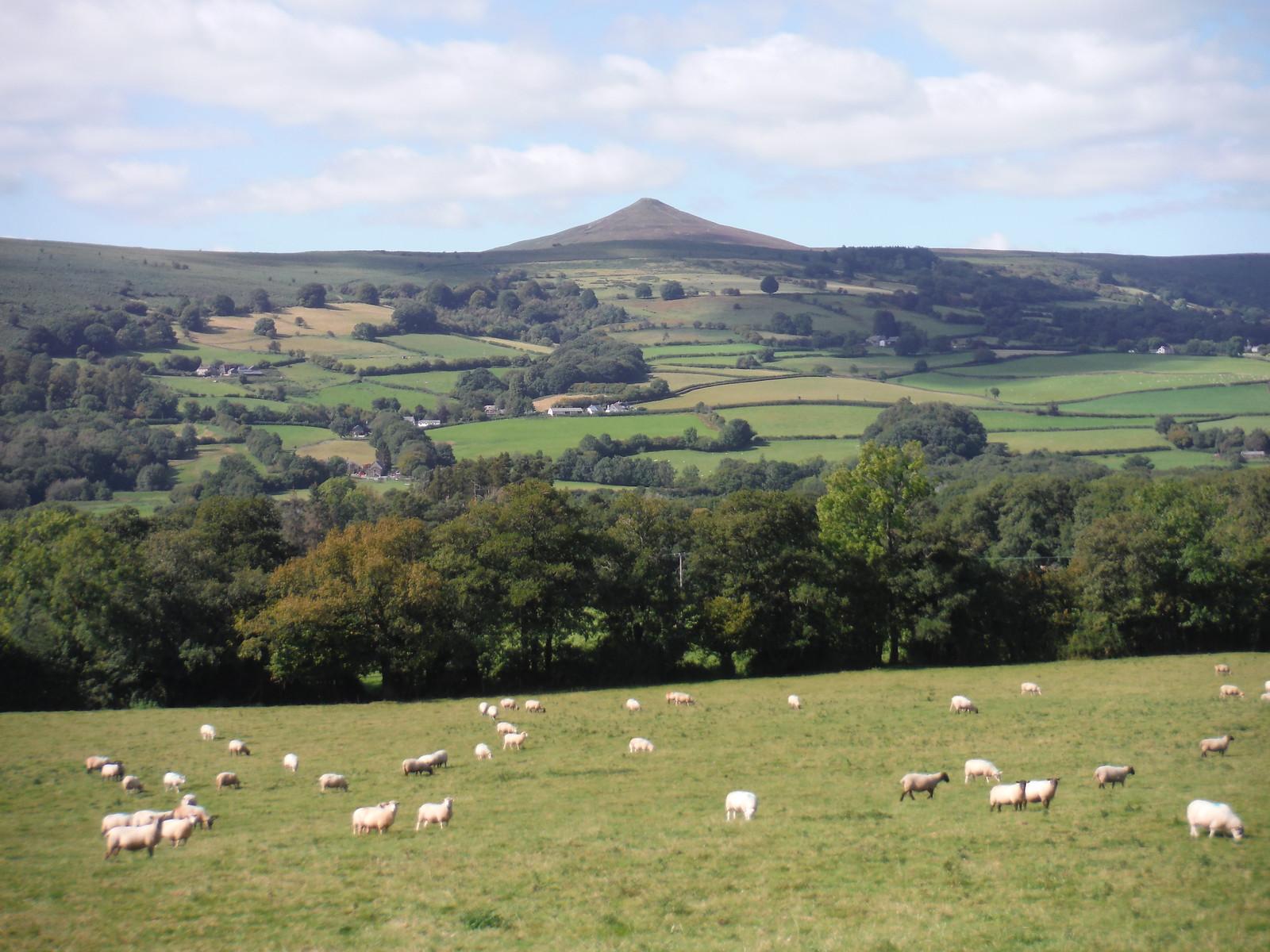 Sugar Loaf from flank of Ysgyryd Fawr SWC Walk 347 - Llanvihangel Crucorney Circular (via Bryn Arw and The Skirrid)