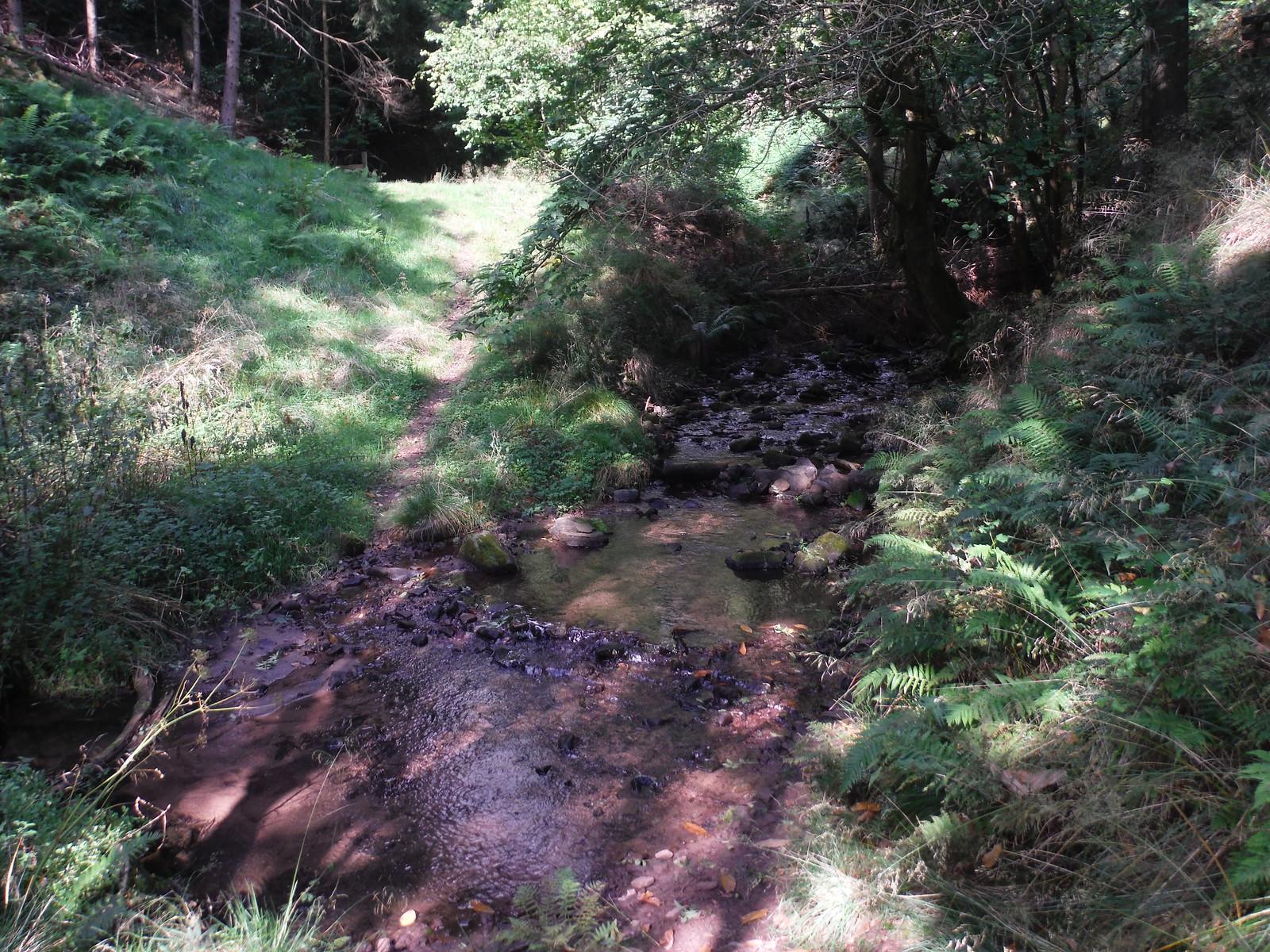 Stream, Cwmbrynarw SWC Walk 347 - Llanvihangel Crucorney Circular (via Bryn Arw and The Skirrid)