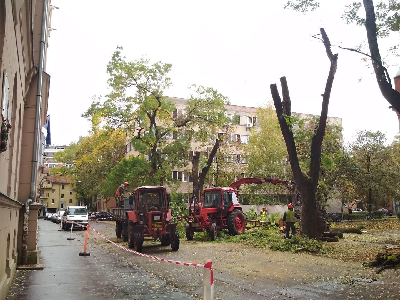 Társasház-építés miatt vágnak ki három hatalmas fát a Belvárosban