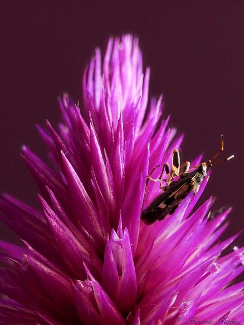 Apilando Insecto y Flor
