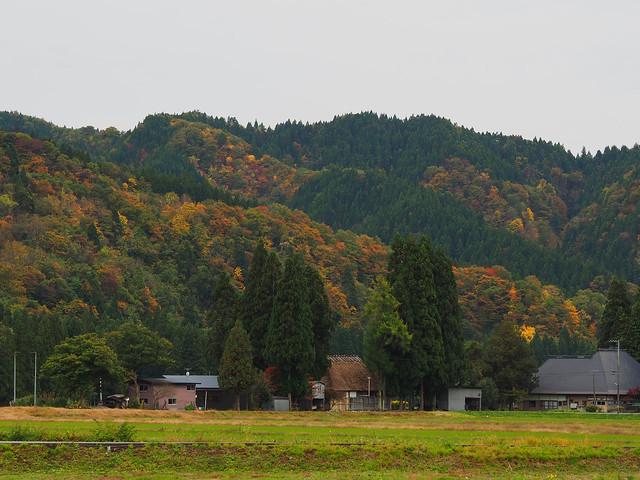 rural scene in autumn