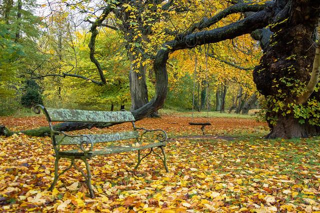 Autumn bench...xx