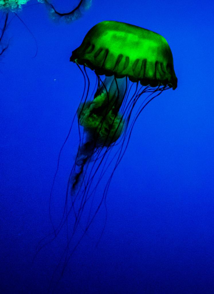 Jelly_4