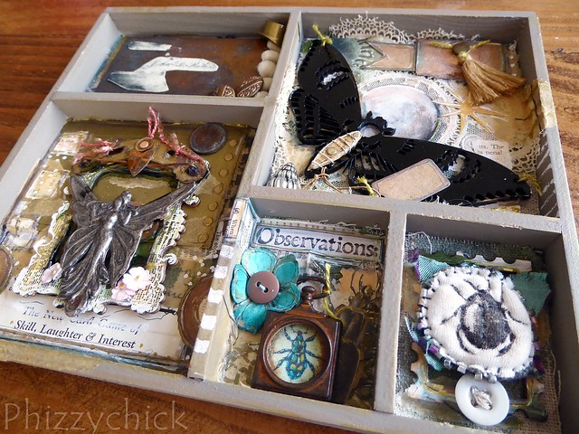 Curio Observations Box