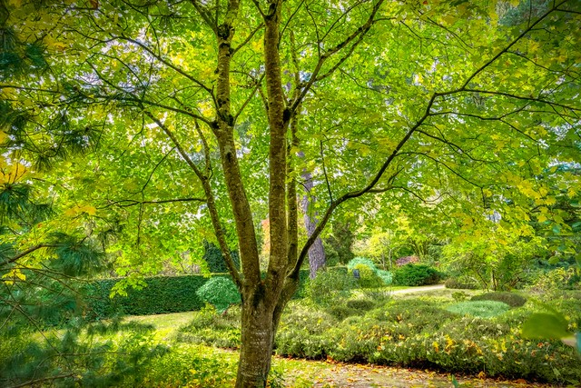 toujours ce fabuleux arboretum des grandes bruyères à Ingrannes dans le loiret