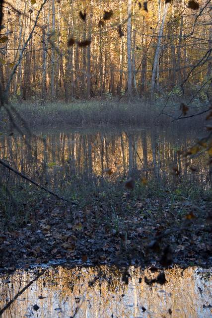 Missouri River Bottom Autumn