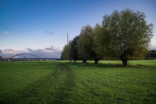 willow trees / Weiden
