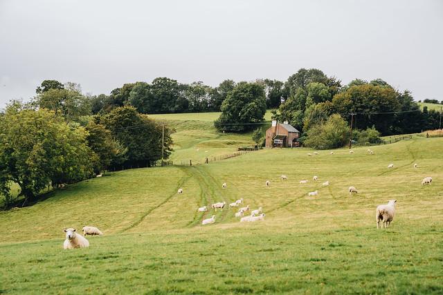 Rye-landscape-8
