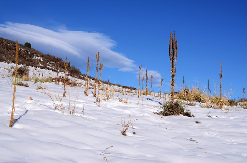 Columbine Trail (15)