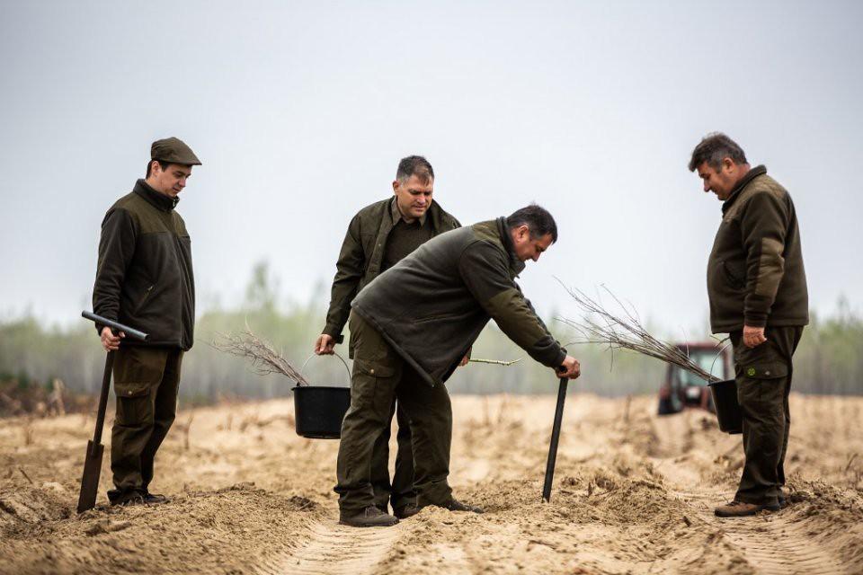 Magyarország elkezdett fákat ültetni