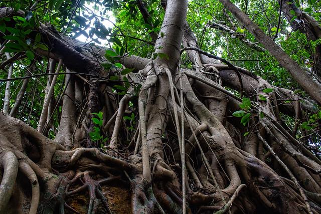 Sculpture of roots