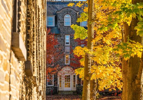 Fall Foliage 2019