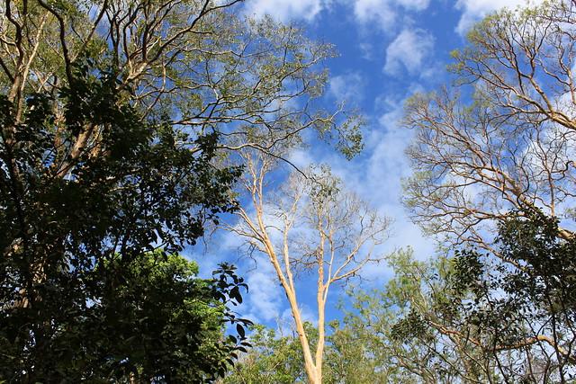 periyar trees