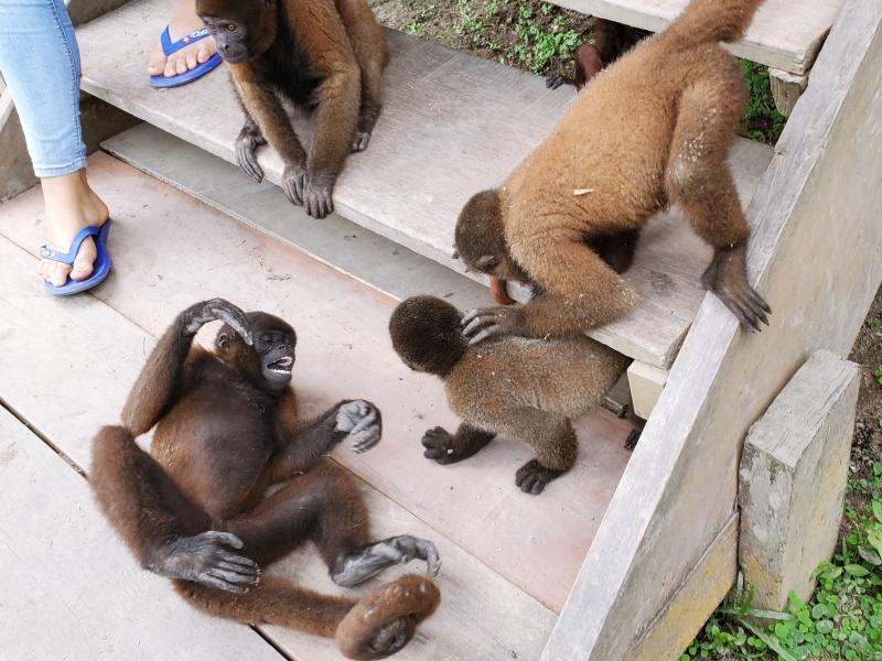 Iquito Monkey Island